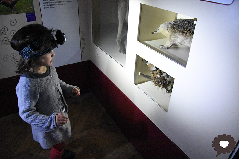 Safaris au musée