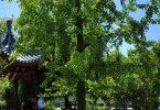 Visites et ateliers au Jardin Botanique du Parc Borély