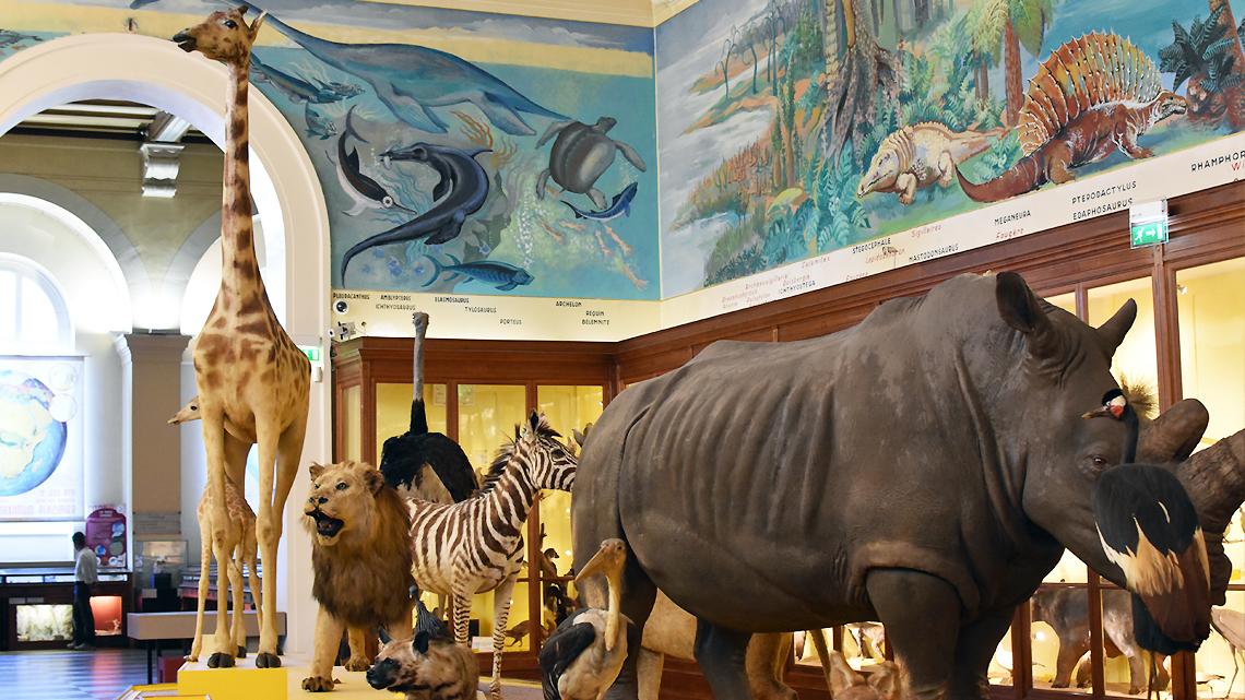 Muséum d'histoire Naturelle Marseille - Palais Longchamp