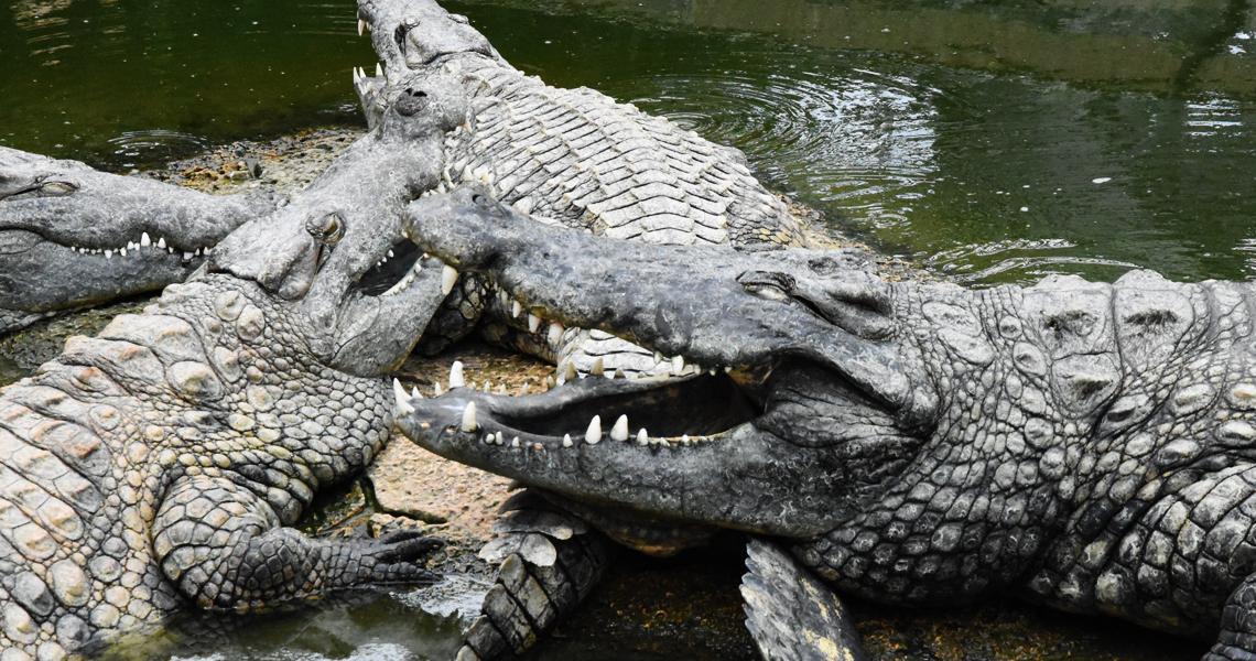 Découvrir en famille la Ferme aux crocodiles à Pierrelatte