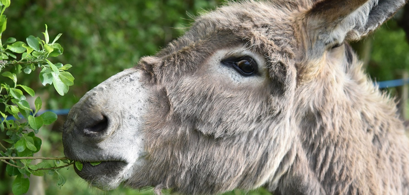 24ème Journée de l'âne