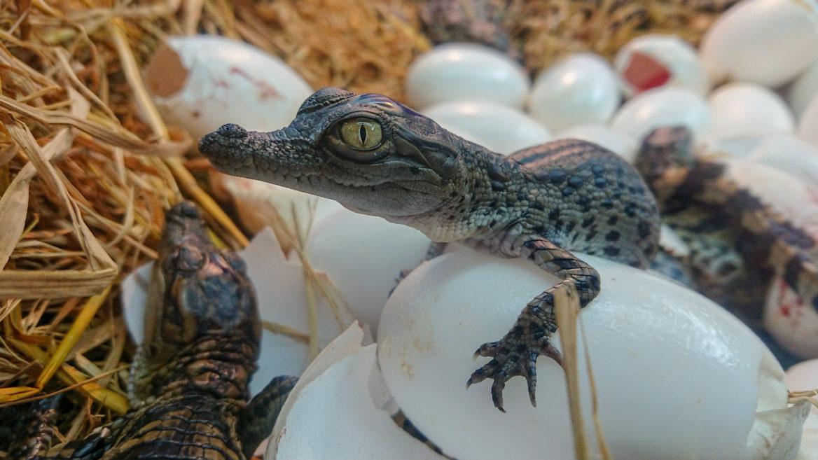 Chasse aux oeufs spécial reptile
