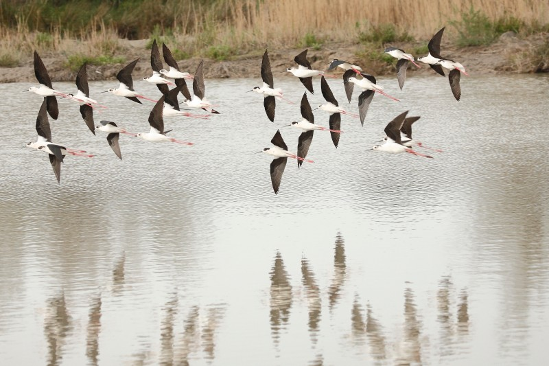 parc ornithologique du Pont de Gau