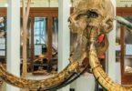 Terre d'évolution, parcours muséum histoire naturelle